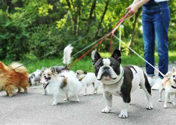 dog-walking-sydney
